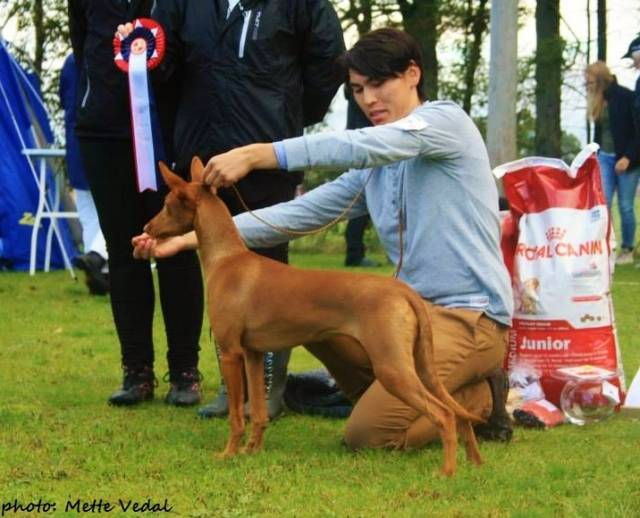 Sansa going Best In Show Puppy over 150 puppies! Photo: Mette Vedal