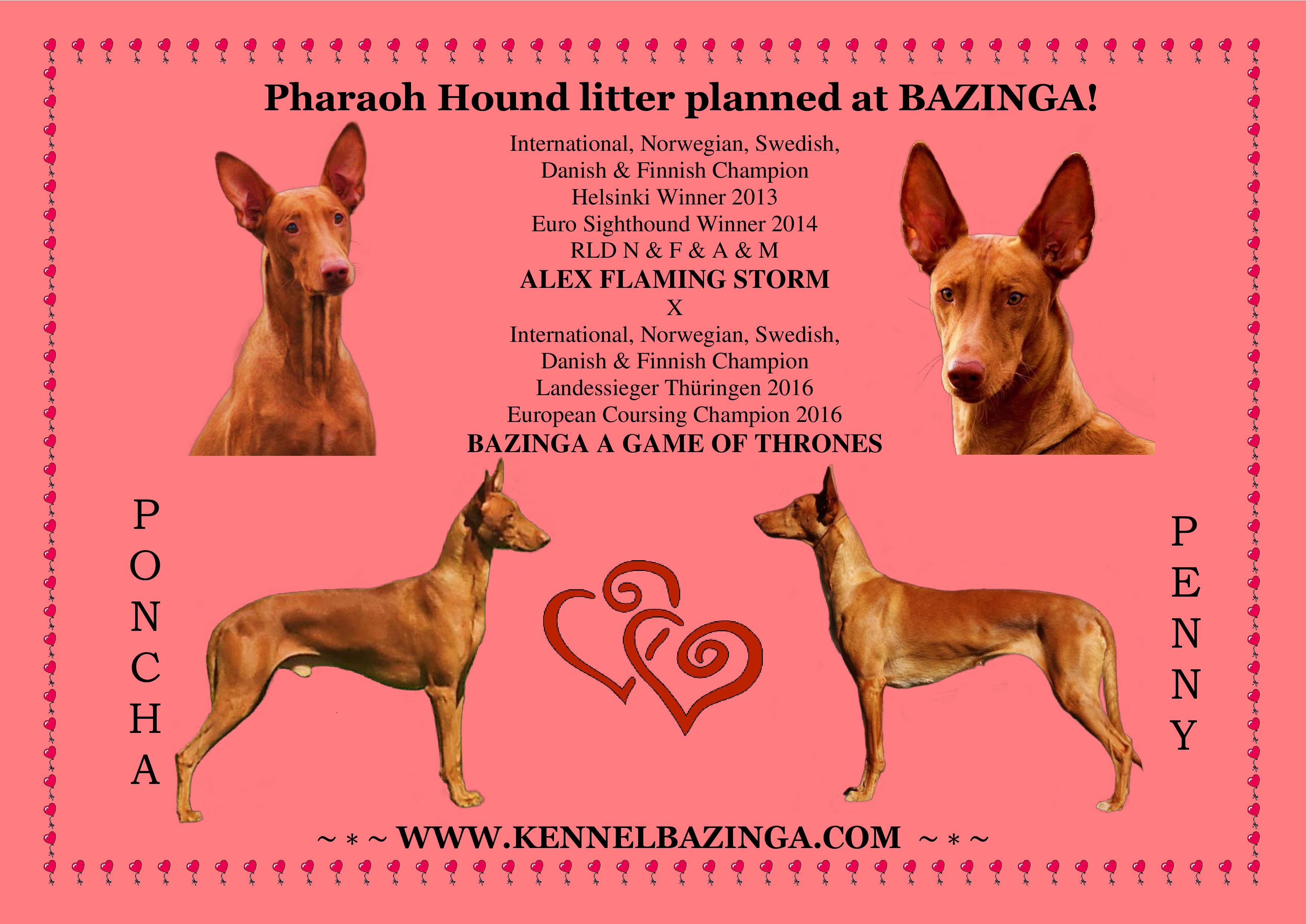 Pharaoh Hound puppies expected in May!