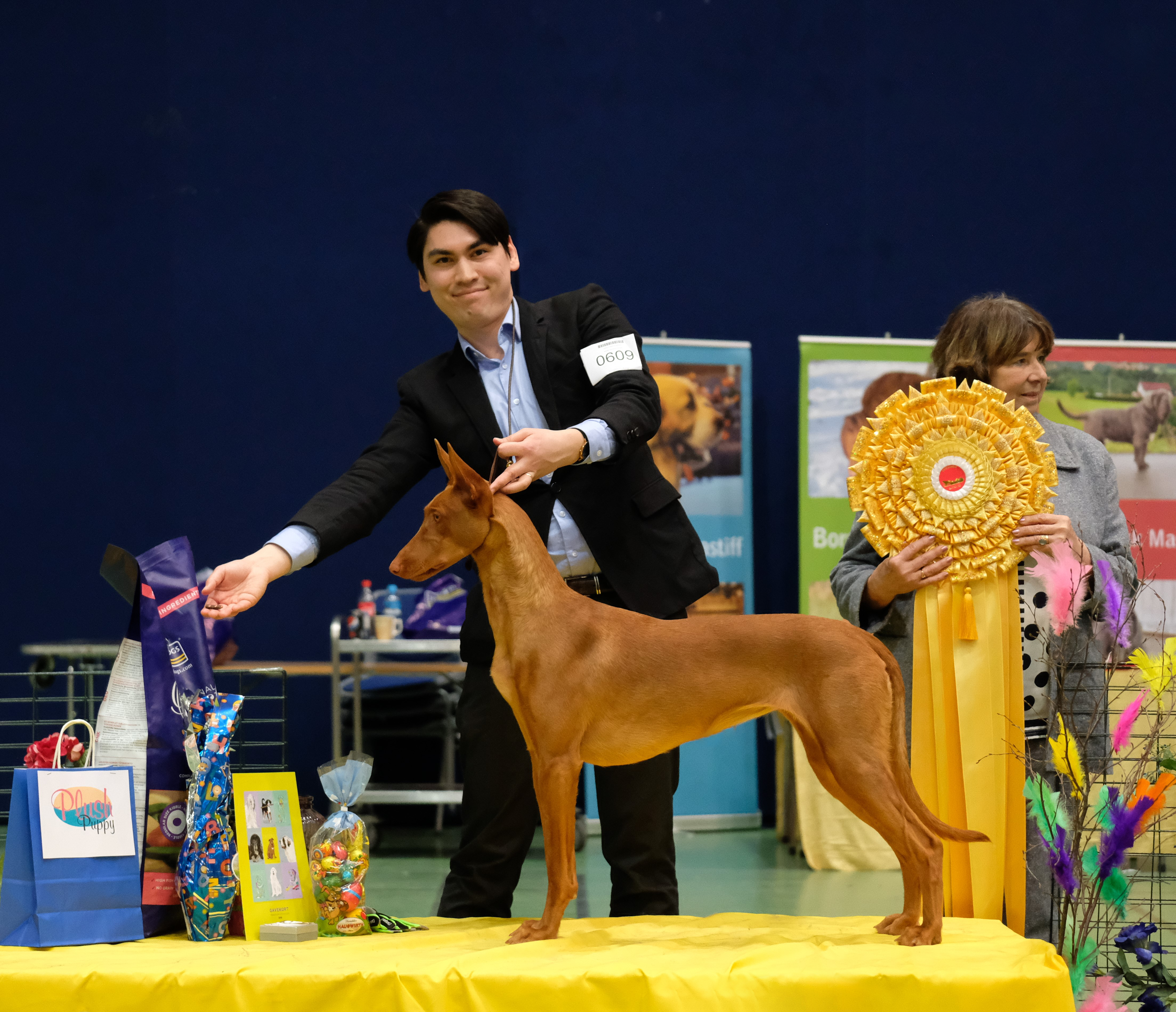 "Bazinga Dracarys The Deathstrike ""Sandy"" BEST IN SHOW junior!"