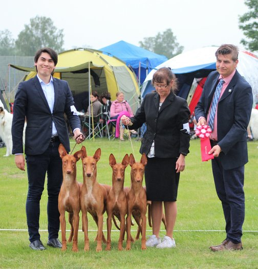 Bazinga Breeders Group going BIS Breeder at the official Swedish Pharaoh Hound Specialty 2019!