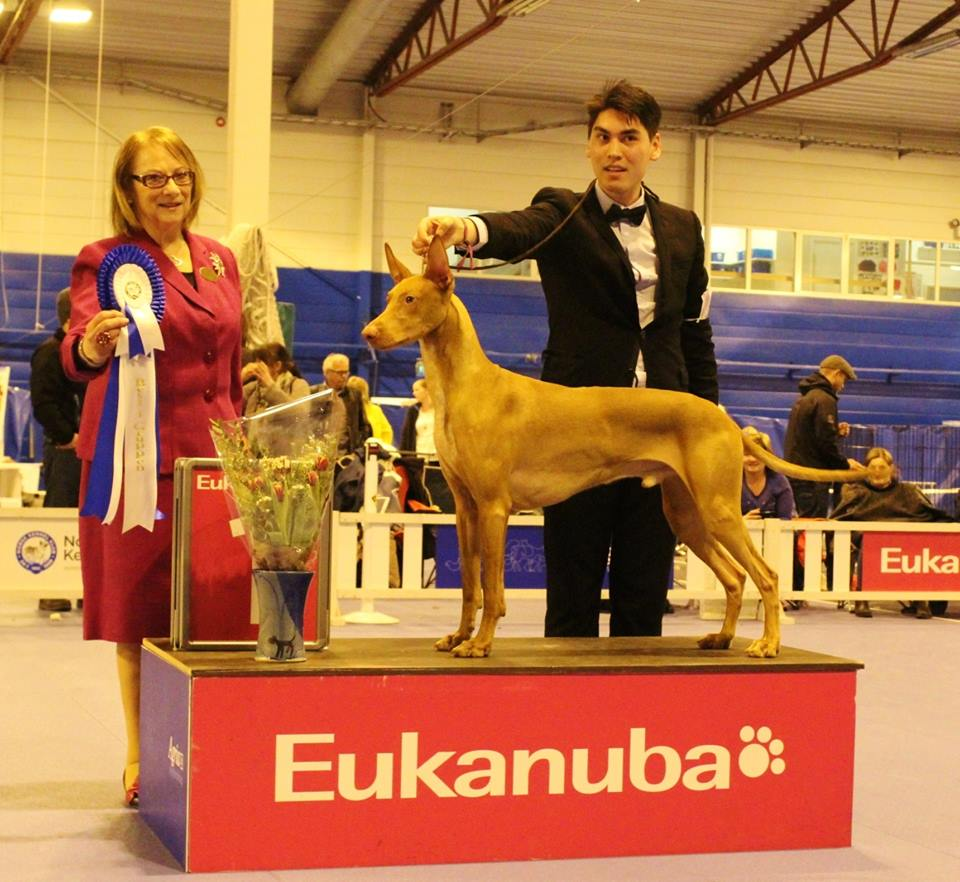 Storm going Group 1st at Bergen INT KC Show 2015 under specialist judge Mrs. Eli-Marie Klepp, Norway